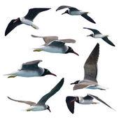 Gulls — Stock Photo