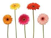 Five flowers — Stock Photo