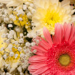 Bouquet — Stock Photo #2189649