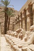埃及 ram — 图库照片