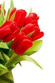 Tulips — Stockfoto