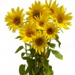 Boquet sunflower — Stock Photo