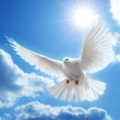 Dove in the air with wings wide open — Stock Photo #1333567