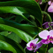 Orchid - Stockfoto