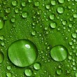 Green leaf with drops of water - Foto de Stock  