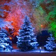 Magic Christmas tree - Foto de Stock