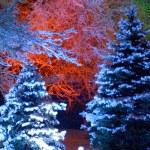 Magic Christmas tree — Stock Photo