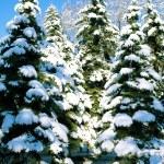 invernali — Foto Stock
