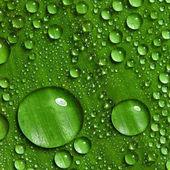 Feuille verte avec des gouttes d'eau — Photo