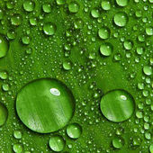 Green leaf with drops of water — Stock Photo