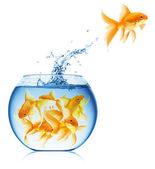 Bouchent la vue du bocal à poissons isolé — Photo