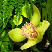 Yellow exotic flower — Stock Photo