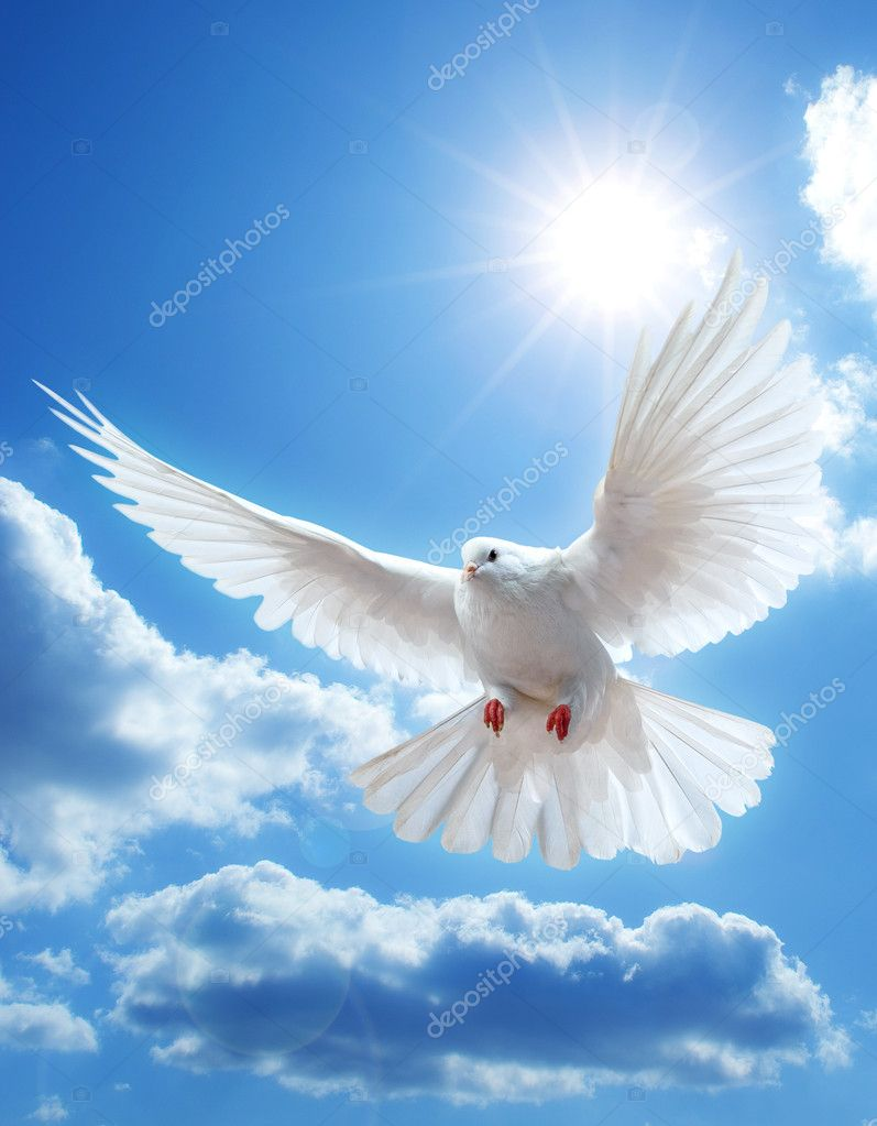 Dove in the air with wings wide open in-front of the sun — Stock Photo #1333567