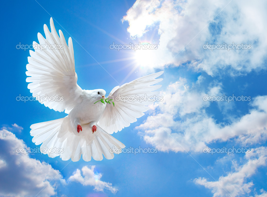 Dove in the air with wings wide open in-front of the sun  Foto de Stock   #1337156