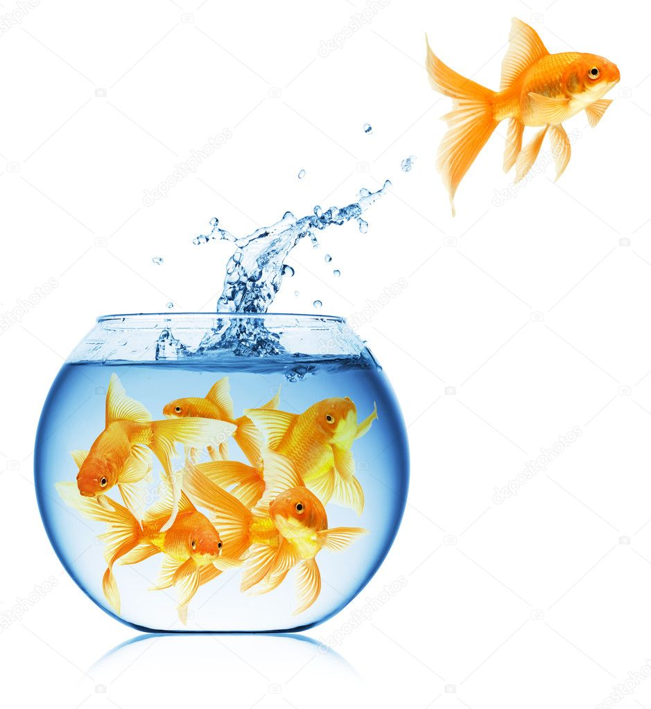Close up view of fish bowl isolated on white — Foto Stock #1337205