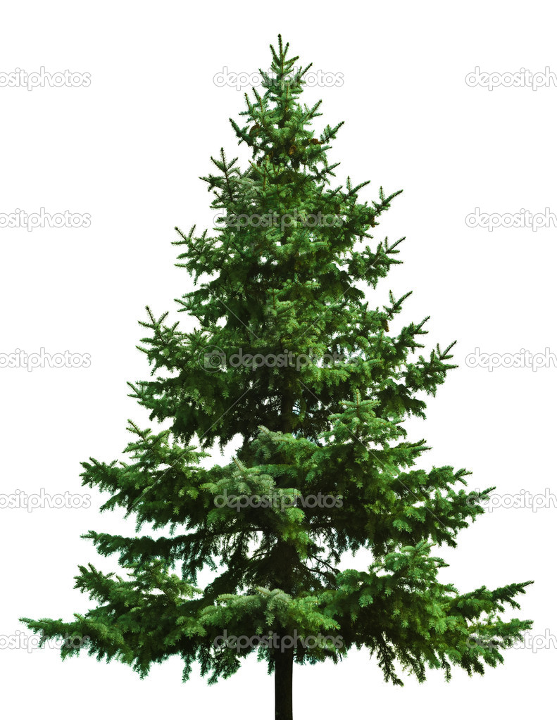 The Bare Christmas tree ready to decorate  Stock Photo #1337671