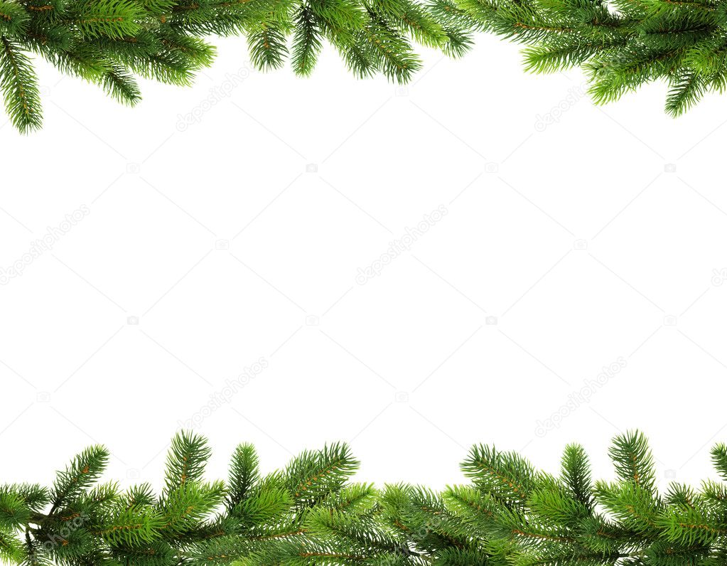 Pine branches isolated on white background  Stock Photo #1338017