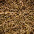 Hay texture background - Stock Photo