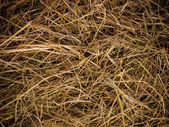 Hay texture background — Stock Photo
