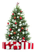 圣诞杉木树 — 图库照片