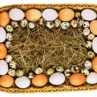 Royalty-Free Stock Photo: Fresh eggs in straw basket isolated