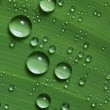 Royalty-Free Stock Photo: Water drops on fresh green leaf