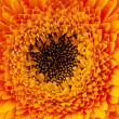 Close up view of yellow daisy - Stock Photo