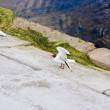 Seagull — Stock Photo #1207676
