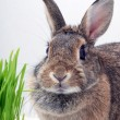Bunny — Stock Photo #1469545