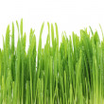 gräs — Stockfoto