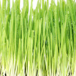 Sappy grass — Stock Photo