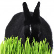 Stock Photo: Bunnie