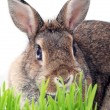 Stock Photo: Bunny