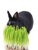 Bunnie isolated — Stock Photo
