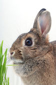 Bunnie furry — Stock Photo