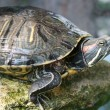 Tortoise — Stock Photo