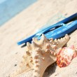 Starfish at the beach — Stock Photo