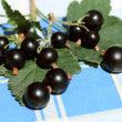 Black currant fruits - Stock Photo
