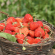 Royalty-Free Stock Photo: Basket with a ripe strawberry