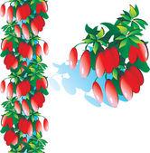 Sweet barberry — Stock Vector