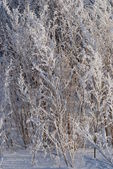 Hoarfrost on a dry grass — Stock Photo