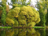 Old branchy tree at a pond — Stock Photo