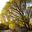 The Old Tree — Stock Photo #1222557
