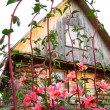 Stock Photo: Wooden house with flowers