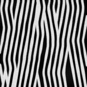 Zebra bont — Stockfoto
