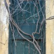 Stock Photo: Antique door sealed by roots