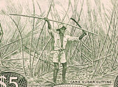 Sugar Cane Harvesting — Stock Photo