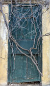 Antique door sealed by roots — Stock Photo