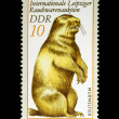 Marmot on Stamp from East Germany — Stock Photo