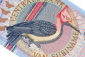 Exotic bird on banknote from Suriname — Stock Photo